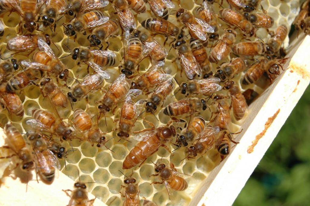 Beehive Rentals San Diego