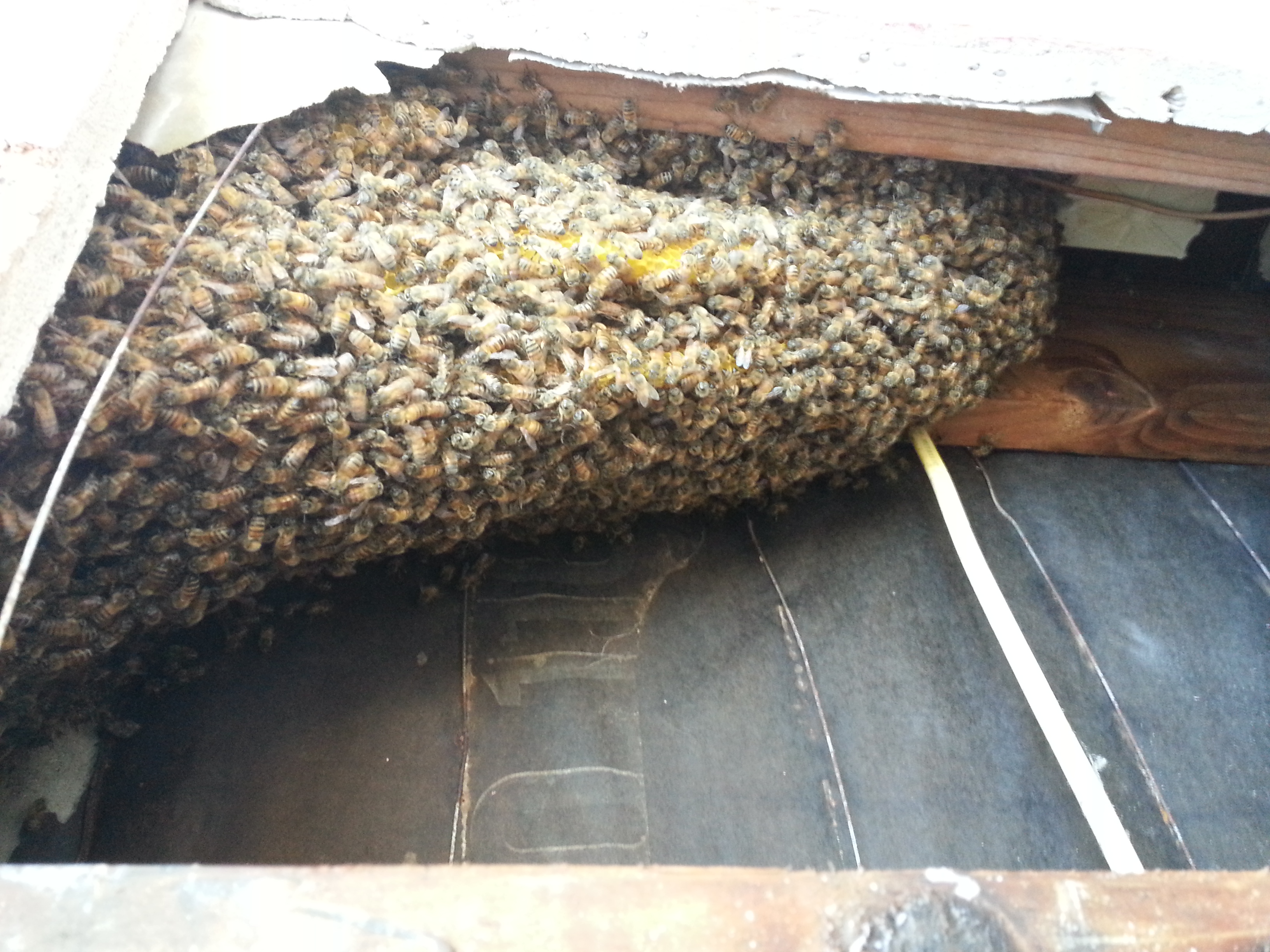 Fallbrook bee removal