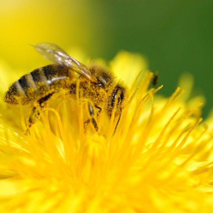 Beekeeping San diego