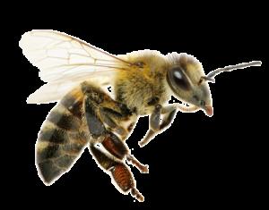 Beekeeper San Diego