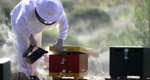 San Diego Beekeeper