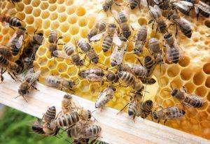 Carlsbad Beekeeper