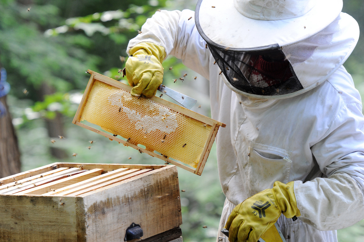Carmel Mountain Beekeeper