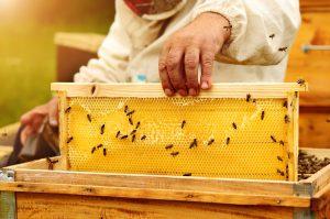 Carmel Valley Beekeeper