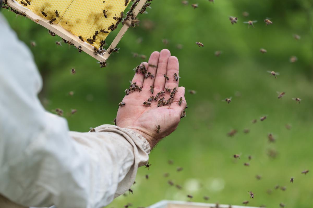 Del Mar Beekeeper