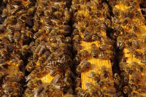 Encinitas Beekeeper