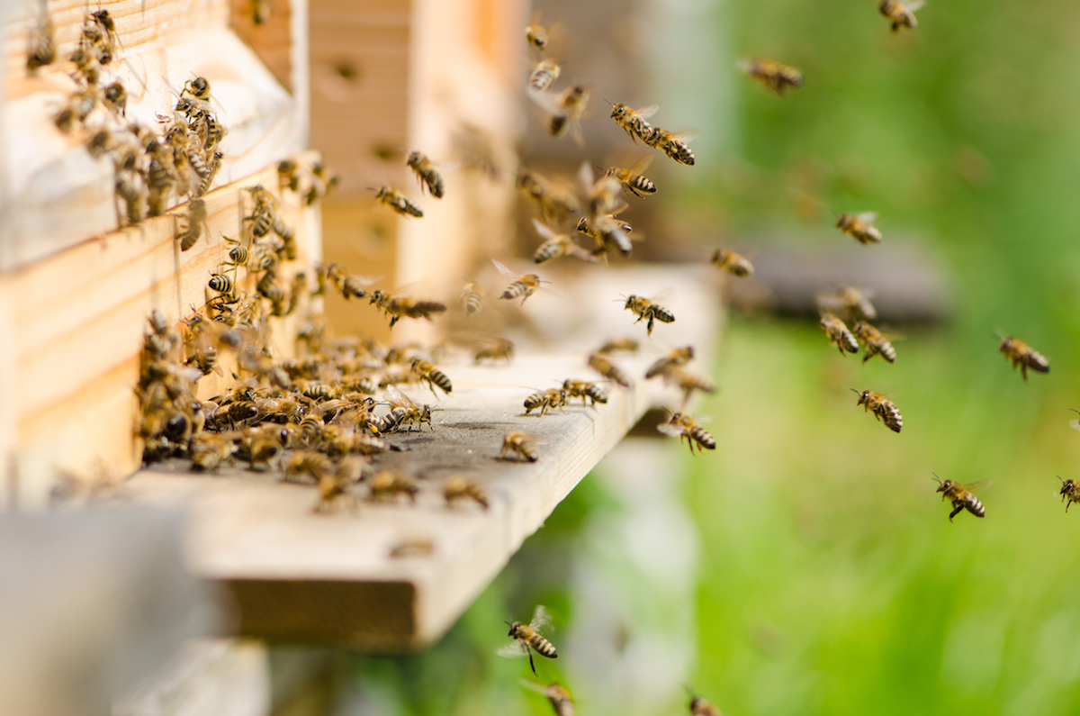 Escondido Beekeeper