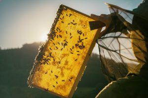 Fallbrook Beekeeper