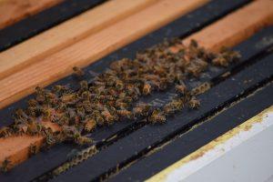 Leucadia Beekeeper