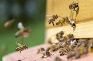 Poway Beekeeper