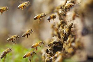 Rancho Bernardo Beekeeper