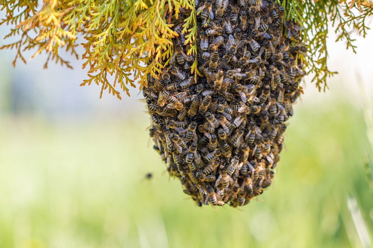 Rancho Santa Fe Beekeeper