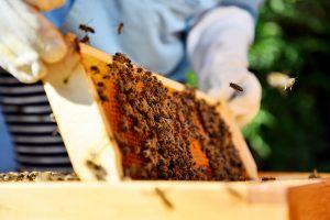 Vista Beekeeper